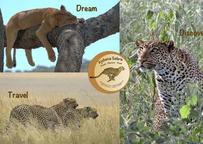 Ajubatus Safaris