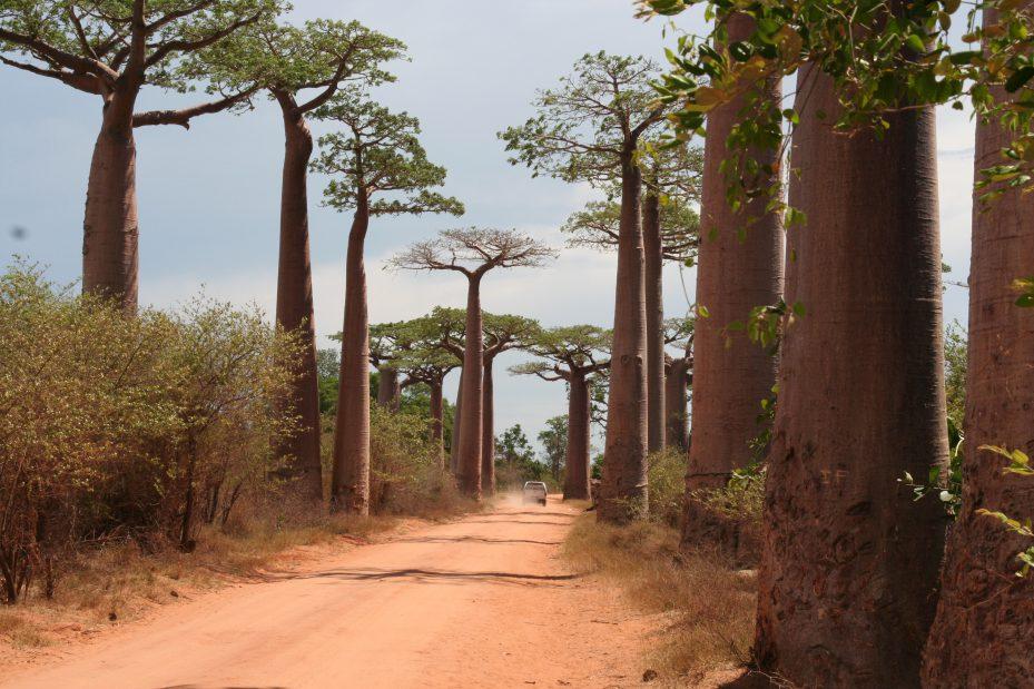 Allee-des-Baobab-e1538131734824