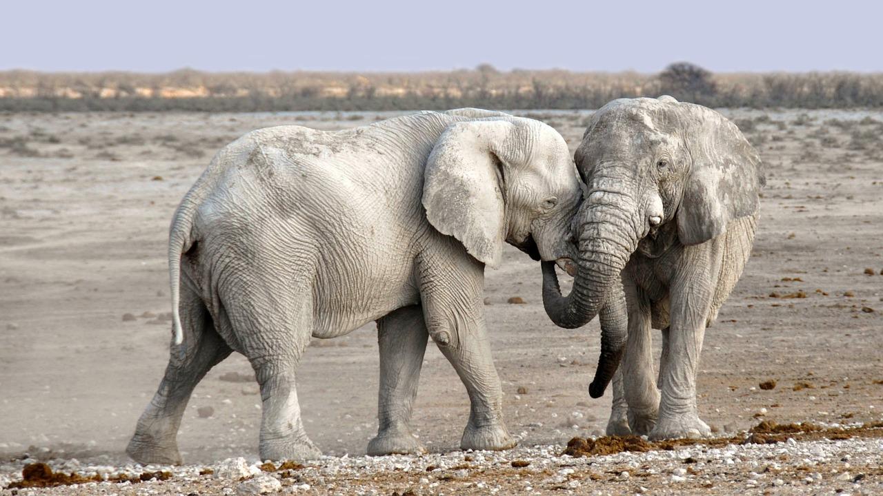 Explore-Namibia