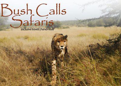 Bush Calls Safaris