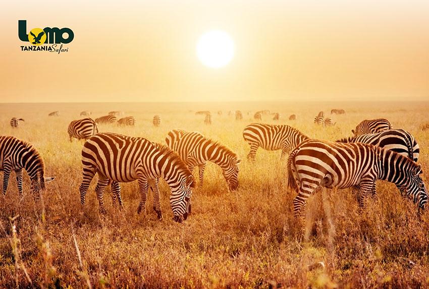 Lomo-Tanzania-Safari_02-S