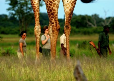 Zimba Safaris