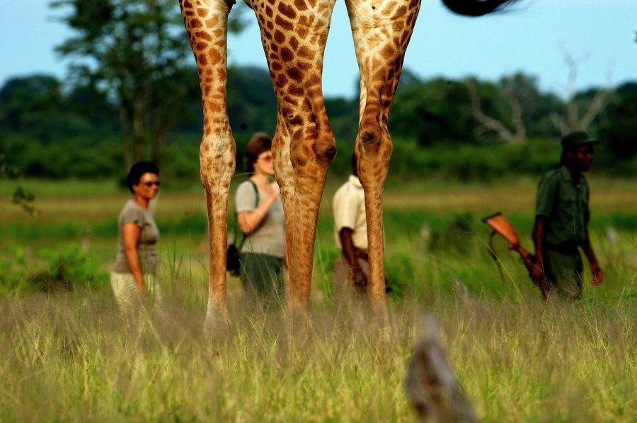 Zimba-Safaris-e1482932428984